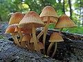 Fungi 27322488956).jpg