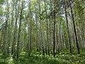 G. Zarechnyy, Sverdlovskaya oblast', Russia - panoramio.jpg