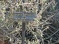 Gardenology.org-IMG 0481 hunt07mar.jpg
