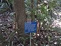 Gardenology.org-IMG 0685 rbgs10dec.jpg