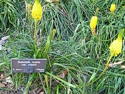 Gardenology.org-IMG 0791 hunt07mar.jpg