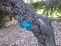 Gardenology.org-IMG 2579 ucla09.jpg