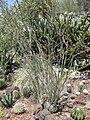 Gardenology.org-IMG 4260 hunt0904.jpg