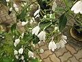 Gardenology.org-IMG 7939 qsbg11mar.jpg