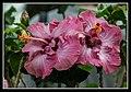 Gardens by the Marina Bay - Dome Flowers-03 (8322677171).jpg