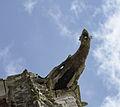 Gargoyle Saint-Ouen 1.jpg