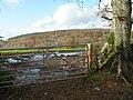 Gateway into a muddy field - geograph.org.uk - 1589163.jpg