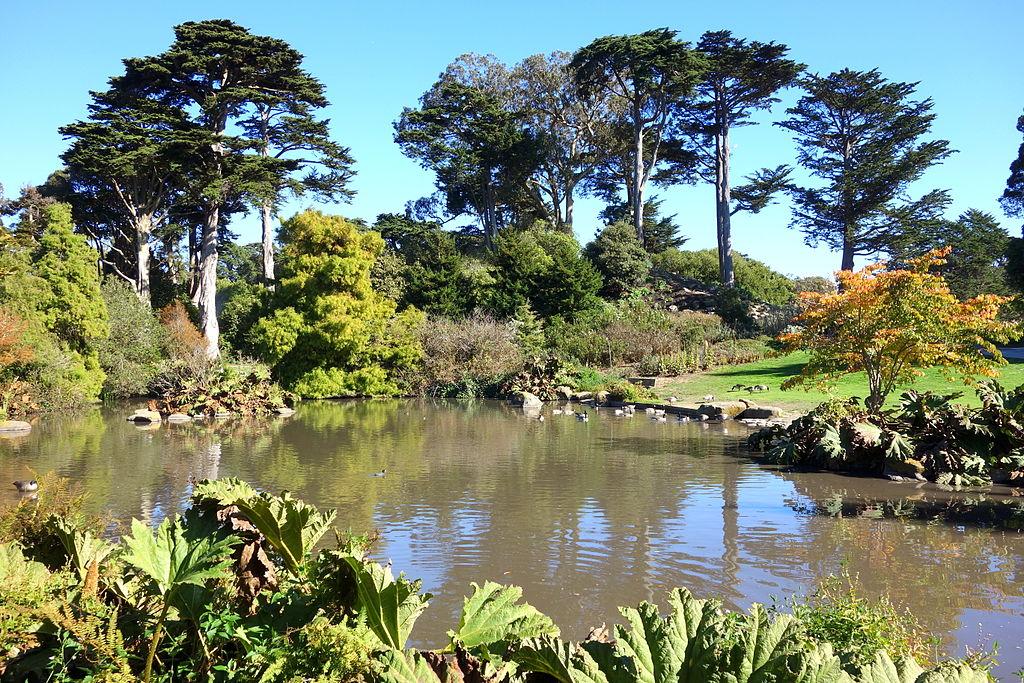 General view - San Francisco Botanical Garden - DSC09901