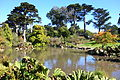 General view - San Francisco Botanical Garden - DSC09901.JPG