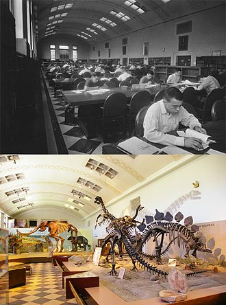 Natural History Museum of Utah - Inside the George Thomas Building, upper photograph: circa 1950, a reading room in the building's library. Lower photograph: the same reading room in 2009, transformed since 1969 into the Utah Museum of Natural History (and dismantled as of 2011). The building is now destined to receive a scientific research center. Note the wrong posture of all skeletal mounts, now re-mounted in anatomically correct postures in the new Rio Tinto building.
