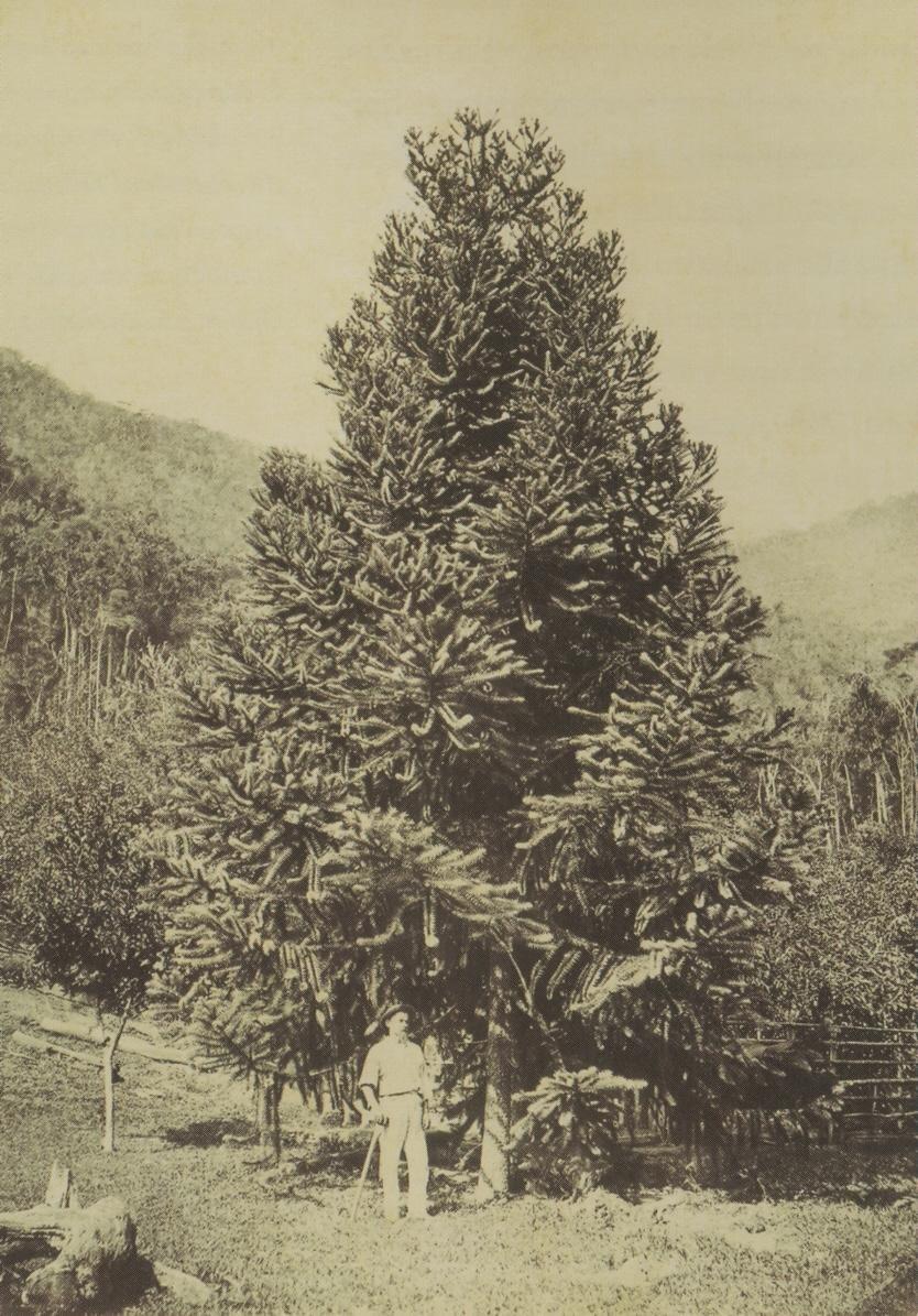 German Vitoria Brazil 1875
