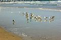 Gfp-florida-daytona-beach-a-group-of-seagulls.jpg