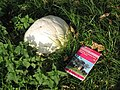 Giant Puff-Ball Fungus - geograph.org.uk - 261538.jpg