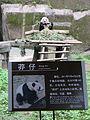 Giant panda and sign, Chongqing Zoo, China.JPG