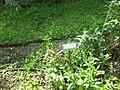 Giardino botanico di Brera (Milan) 161.jpg
