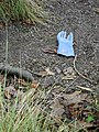 Glove, Teign estuary foreshore - geograph.org.uk - 1188681.jpg