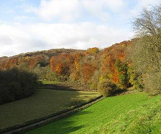 Golden valley autumn.jpg