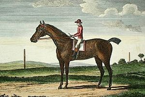 Goldfinder (horse) - Painting of Goldfinder