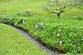 Goppertsweiler Gartenzwerge 01.jpg
