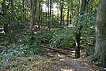 Grabhügel in den Hademarscher Bergen NIK 4221.JPG