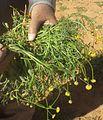 Grass10003.jpg