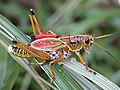 Grasshopper modelling - Flickr - spiderman (Frank).jpg