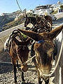 Greece-Donkey.jpg