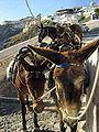 Greece-Donkey.jpg