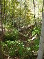 Griffy Woods - ravine - P1100471.JPG