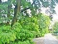 Gruenau - Am Teltowkanal - geo.hlipp.de - 37651.jpg
