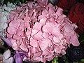 HKCL 香港中央圖書館 CWB 展覽 exhibition flowers February 2019 SSG 06.jpg