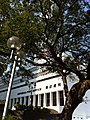 HK Central Connaught Place tree view General Post Office Dec-2012.JPG
