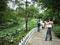 HK Park Lotus pool.jpg
