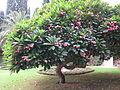Haifa (10372619183).jpg