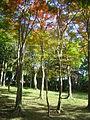 Hakone Ashinoko lake dsc05427.jpg