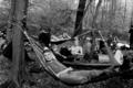 Hambi Bleibt forest.png