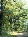 Harbke Forst Eichenallee - panoramio.jpg