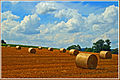 Harvest time - August 2007.jpg