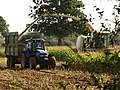 Harvesting maize, Longaller (3) - geograph.org.uk - 1001012.jpg