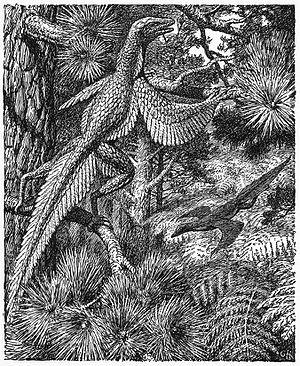 Proavis - Image: Heilmann fig 142