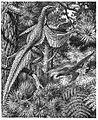 Heilmann fig142.jpg
