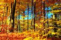 HerbstFeuer (2040615896).jpg