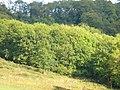 Herd of Wild Deer at Westwood Bottom - geograph.org.uk - 231421.jpg