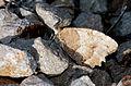 Hermit - Chazara briseis - Cadı.jpg
