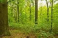 Herrnhut Naturschutzgebiet Hengstberg 05.jpg