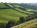 Hillside at Loscombe - geograph.org.uk - 560892.jpg