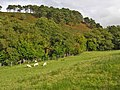 Hillside east of Llanidloes - geograph.org.uk - 986778.jpg