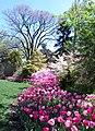 Hillwood Gardens in April (17571402286).jpg
