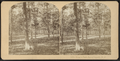 Hoey's Park, Long Branch, N.J, from Robert N. Dennis collection of stereoscopic views.png
