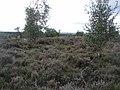 Holterberg - 2009 - panoramio.jpg